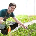 Cómo y cuando plantar zanahorias.