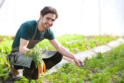 Cómo y cuando plantar zanahorias