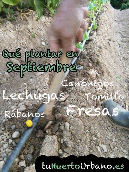 Qué podemos plantar y sembrar en Septiembre