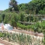 Huerto urbano Moliere en Málaga, apúntate y disfrútalo gratis.