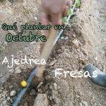Qué podemos plantar y sembrar en Octubre.