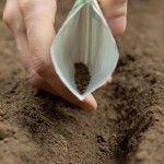 Qué podemos plantar en nuestro huerto en Julio