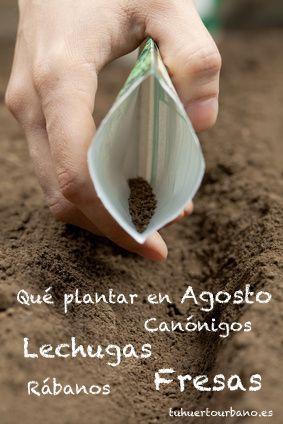 que plantar en Agosto