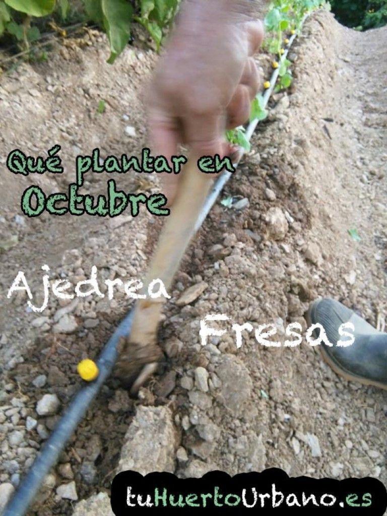 Qué plantar en Octubre