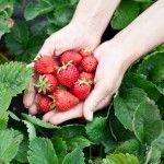Tipos de fresas