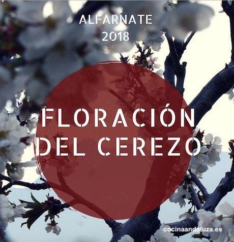 Floración del Cerezo en Alfarnate