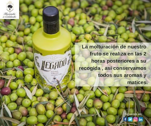 aceites de oliva virgenes extra bajo sus marcas Legado, Experience y Malaca Vetus