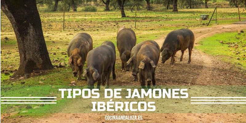 tipos de jamones ibéricos